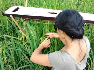thuy in the field